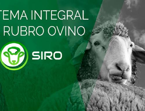 Sistema integral del rubro ovino (SIRO)