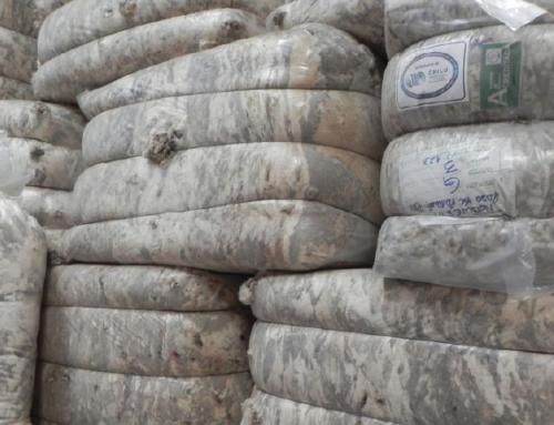 Las exportaciones de lana aumentaron 32% en el primer cuatrimestre